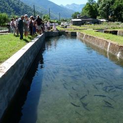 Visite autour des bassins